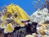 Bonaire - Skin n Scuba - May2011